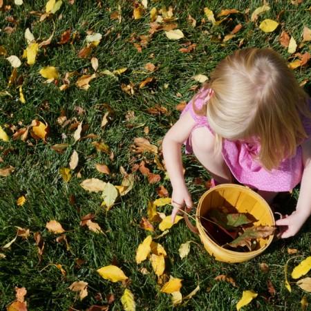 Fall Leaves - 05